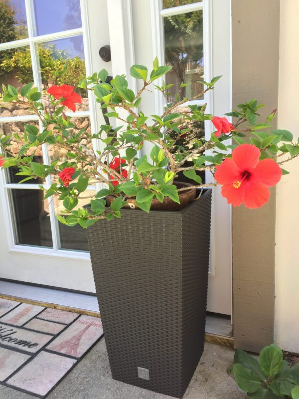 """Rattan-Style Tall Square Planter in 24"""" size"""