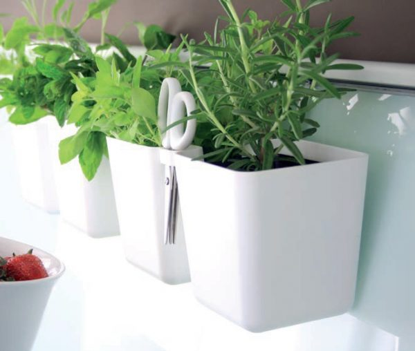 With our indoor Cuby Kitchen Herb Planter you can grow herbs and realize your herb planter ideas directly in your kitchen. Then just use specially designed herb scissors, which are included, cut the herbs and add to your favorite food. So simple and convenient.